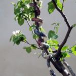serpente tentatore 2012