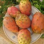fico india frutti