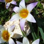 croco di marzo