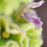 profilo fiore