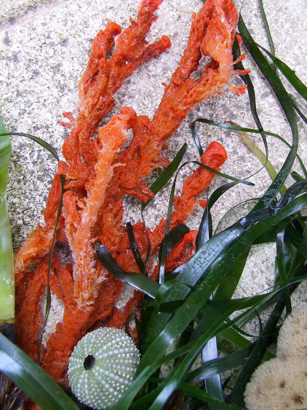 Le grandi praterie del mare: la posidonia