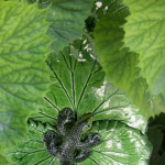 foglie vere e finte 2