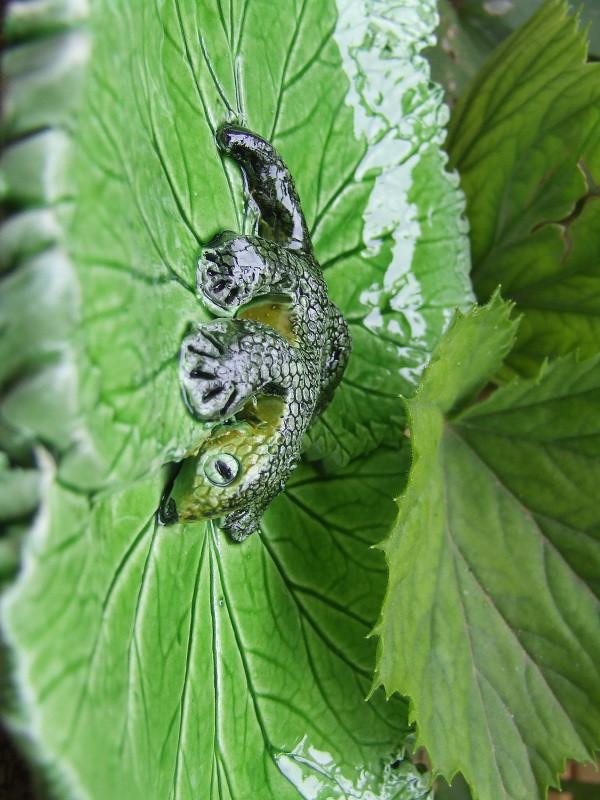 Foglie incantate ovvero l'incanto delle foglie