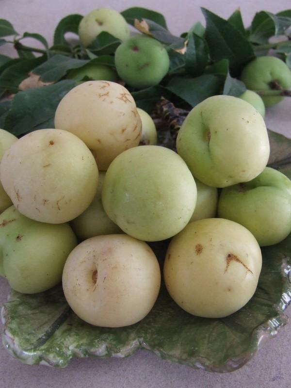 Merendella : il profumo di un frutto antico