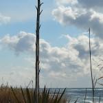 agave-neve