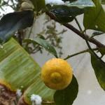 limone-neve