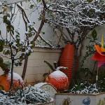 patio-neve